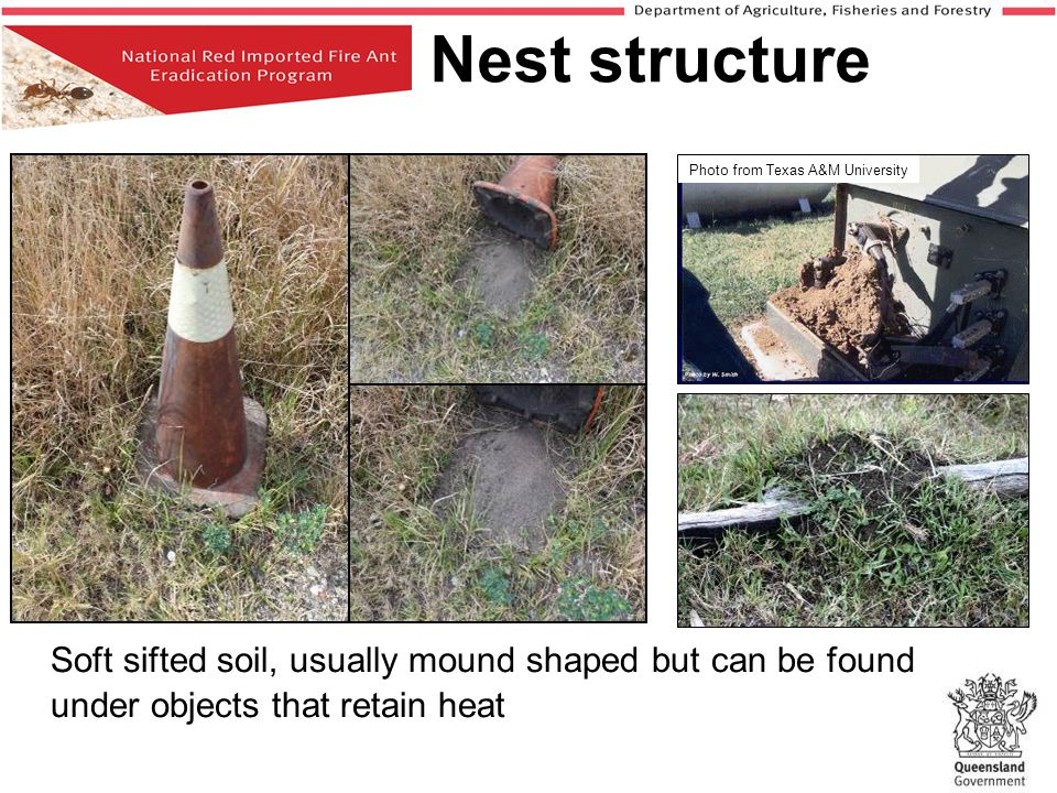 Nest structure Photo from Texas A&M University.