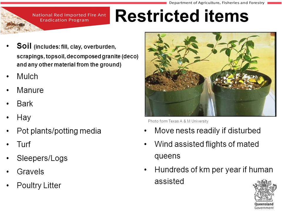 Restricted items Soil (includes: fill, clay, overburden, scrapings, topsoil, decomposed granite (deco) and any other material from the ground)