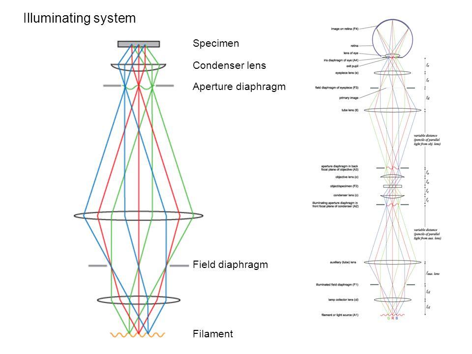 Illuminating system Specimen Condenser lens Aperture diaphragm