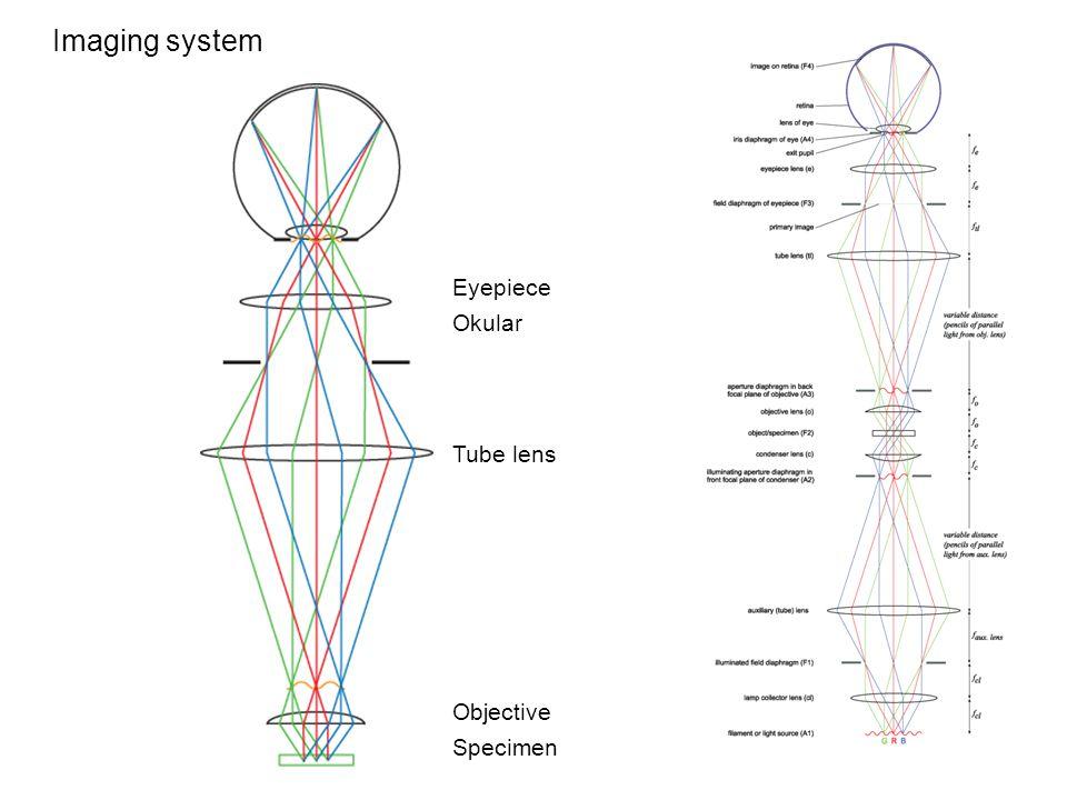 Imaging system Eyepiece Okular Tube lens Objective Specimen
