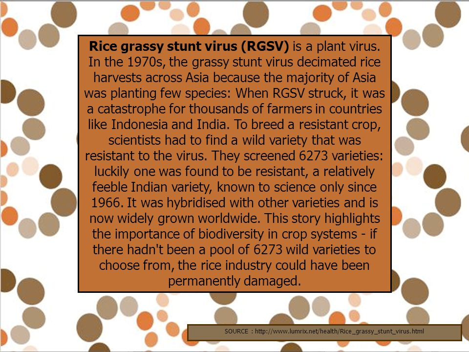 SOURCE : http://www.lumrix.net/health/Rice_grassy_stunt_virus.html