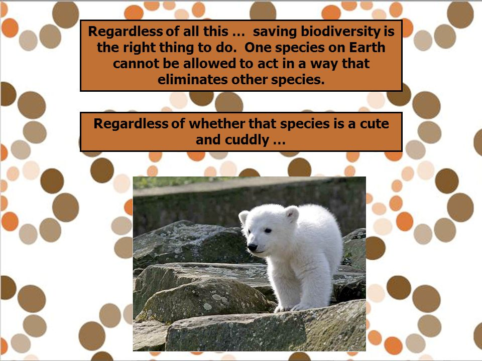 Regardless of whether that species is a cute and cuddly …