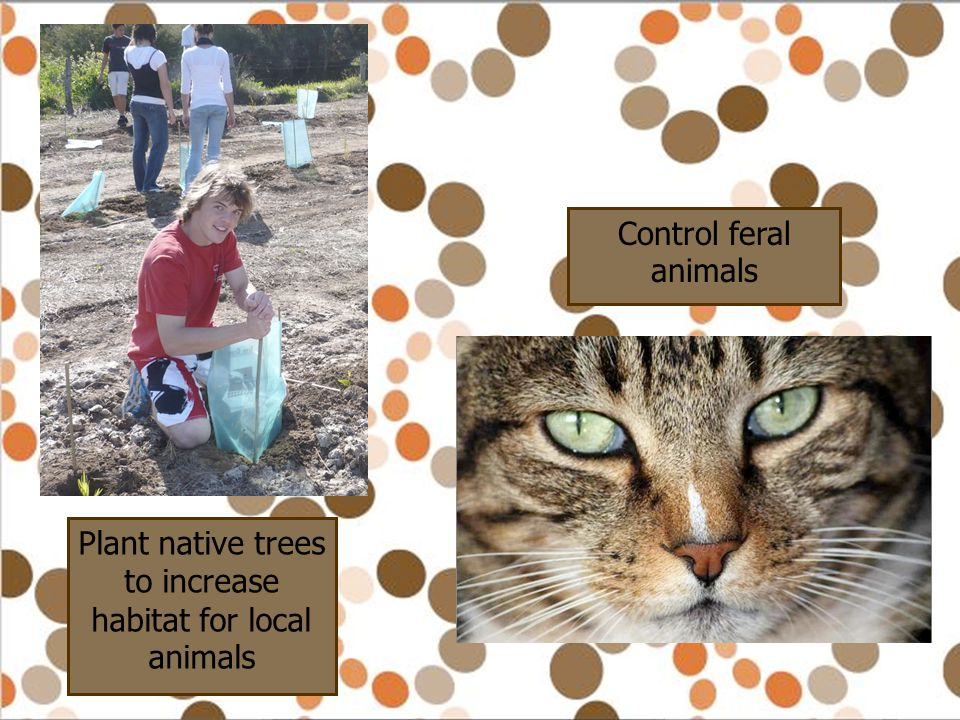 Plant native trees to increase habitat for local animals