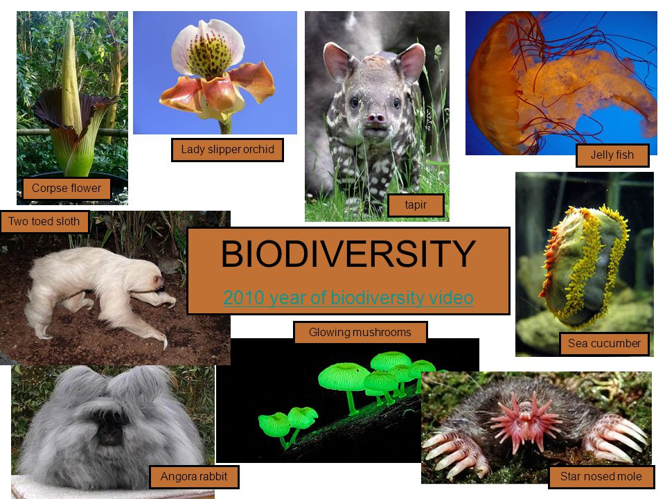 2010 year of biodiversity video