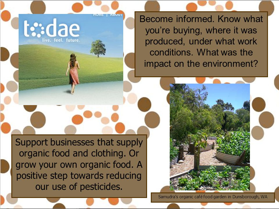Samudra's organic café food garden in Dunsborough, WA
