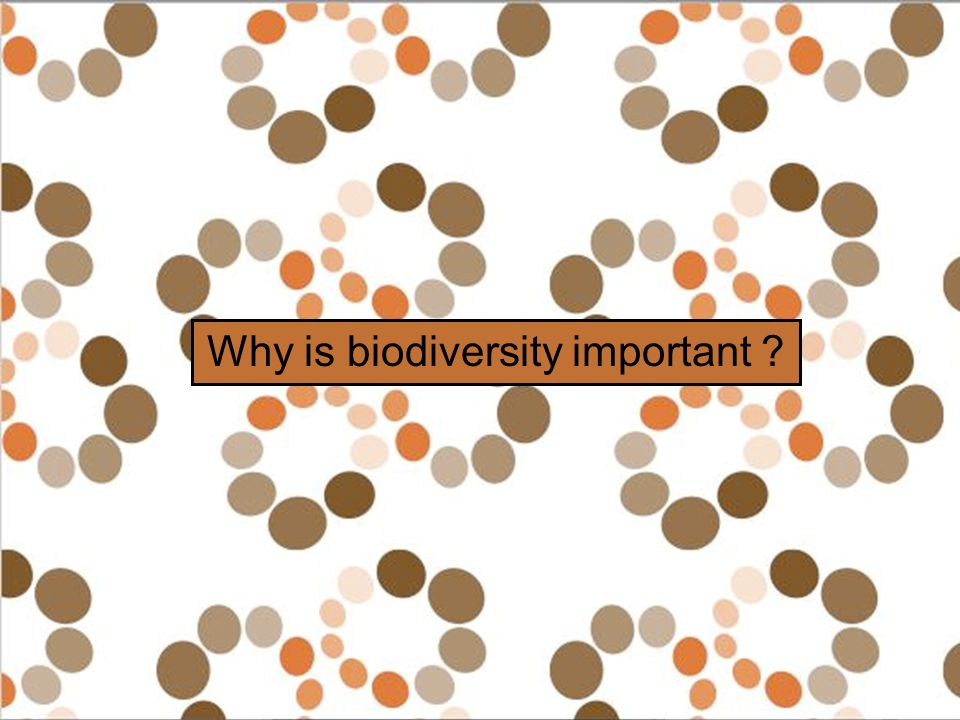 Why is biodiversity important