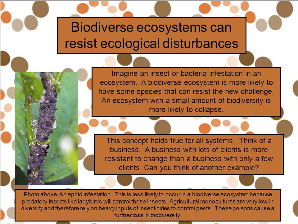 Biodiverse ecosystems can resist ecological disturbances