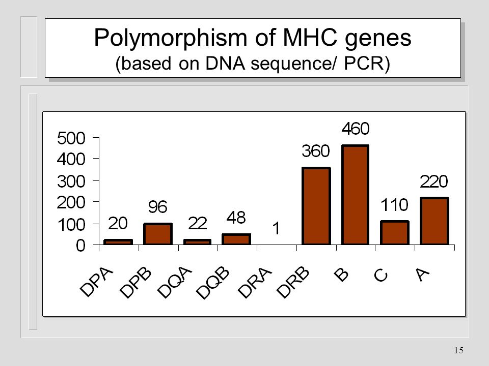 Polymorphism of MHC genes (based on DNA sequence/ PCR)