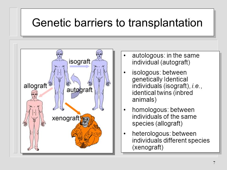 Genetic barriers to transplantation