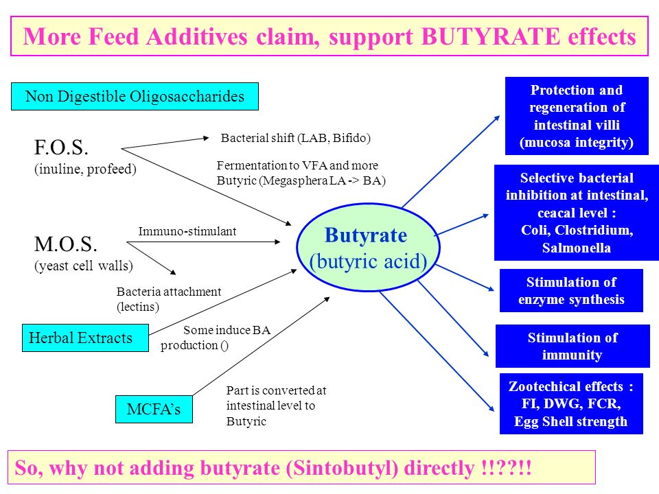 More Feed Additives claim, support BUTYRATE effects