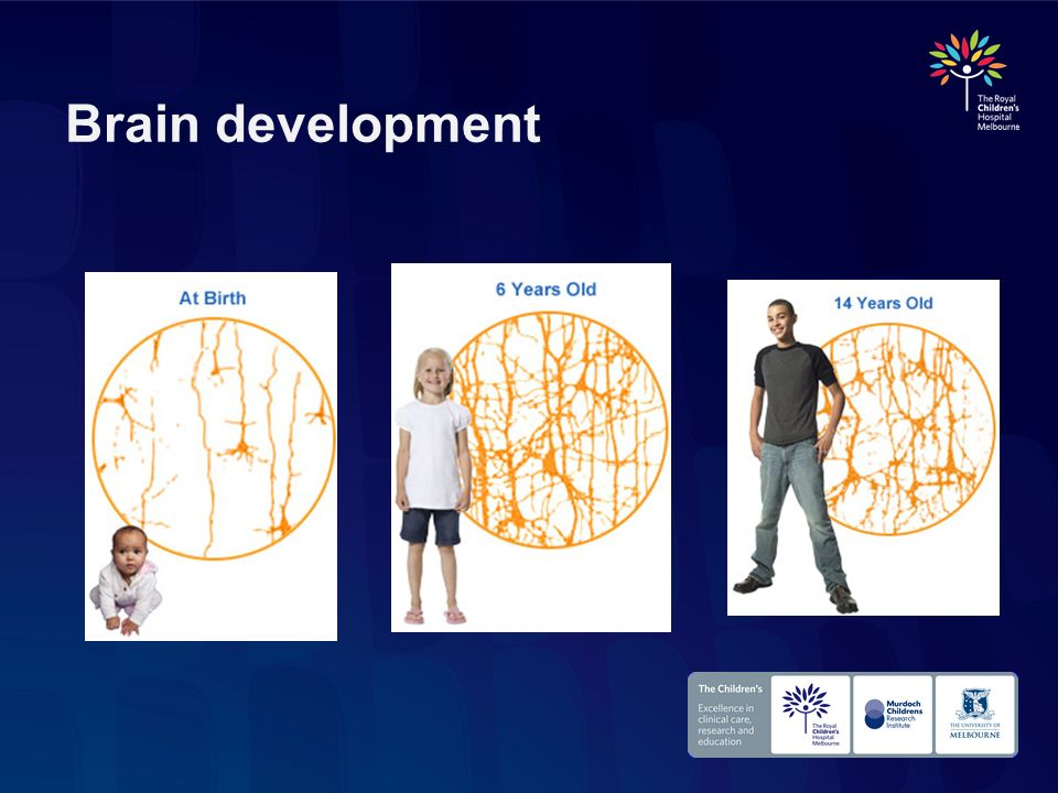 Brain development [Slide option 2: No flash – static images]