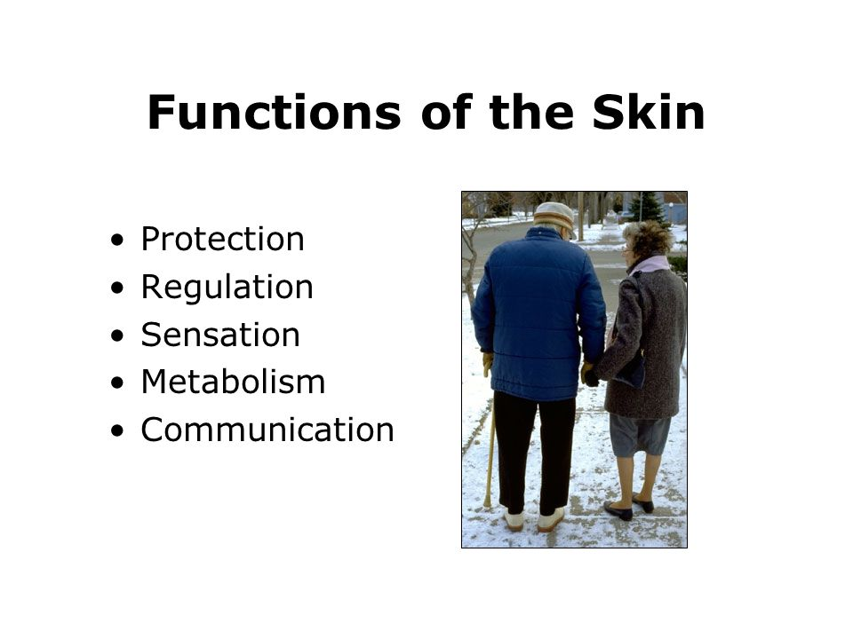 Functions of the Skin Protection Regulation Sensation Metabolism
