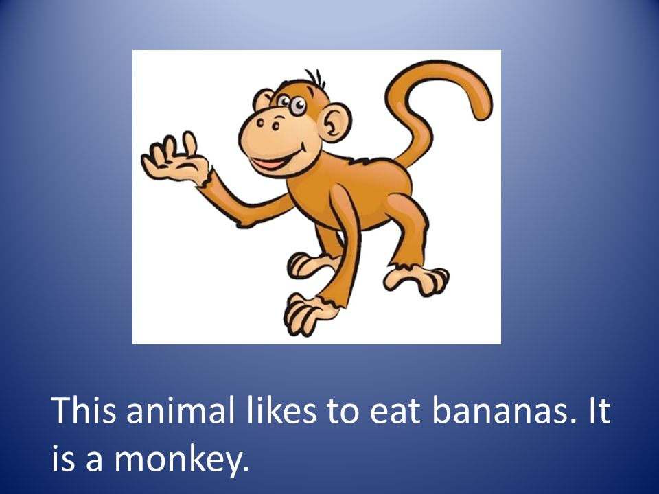 This animal likes to eat bananas. It is a monkey.