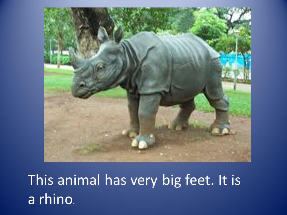 This animal has very big feet. It is a rhino.