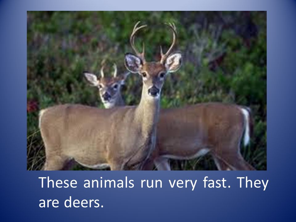 These animals run very fast. They are deers.