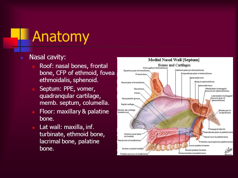 Diseases of the nose sinuses ppt video online download for Floor of nasal cavity