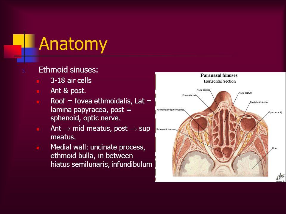 Anatomy Ethmoid sinuses: 3-18 air cells Ant & post.