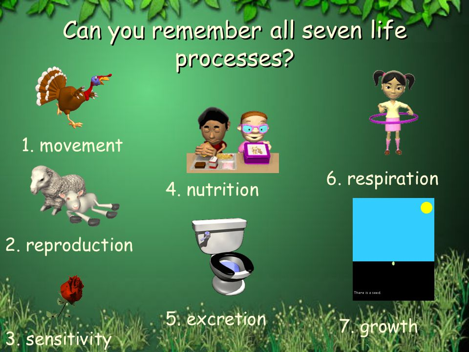 Can you remember all seven life processes