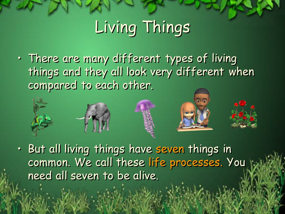 Let's Look At Living Things  Ppt Video Online Download. Interior For Living Room Pictures. Living Room Color Schemes Tan Couch. Floral Curtains For Living Room. Dining Room Chairs With Leather Seats