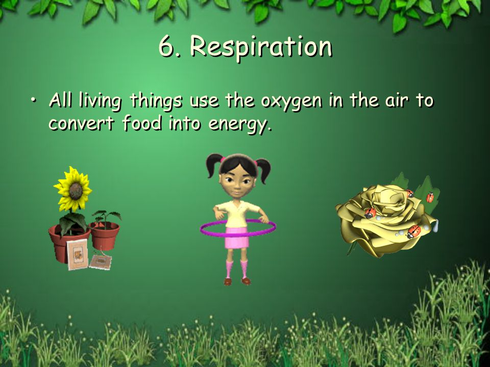 6. Respiration All living things use the oxygen in the air to convert food into energy.