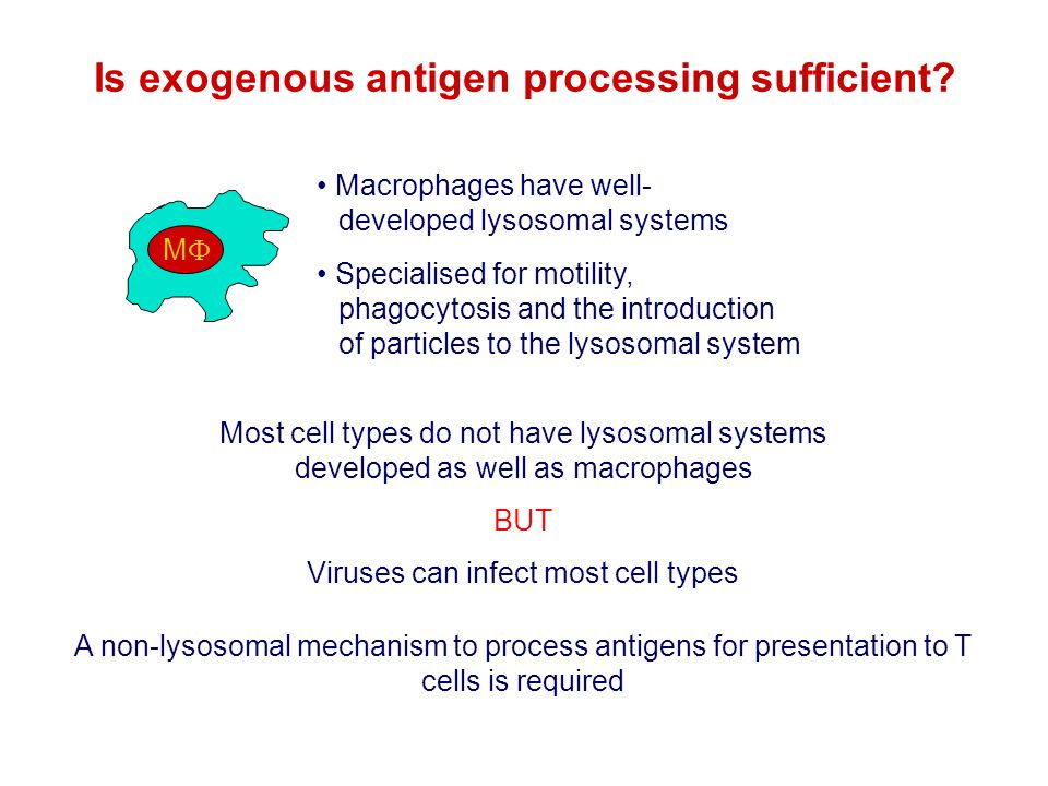 Is exogenous antigen processing sufficient