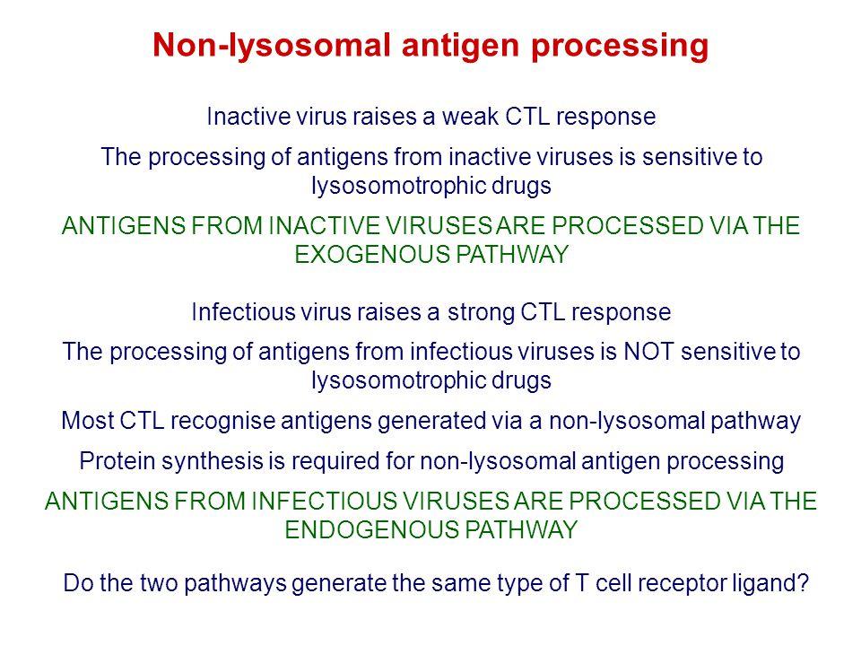 Non-lysosomal antigen processing