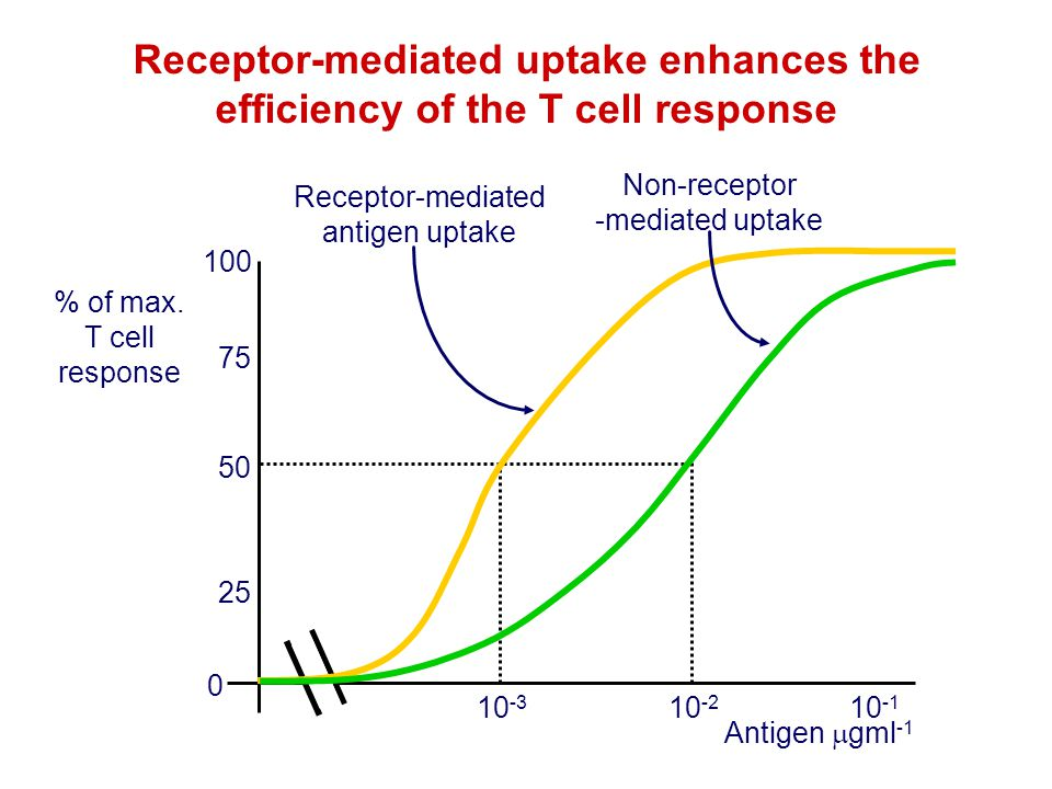 Receptor-mediated uptake enhances the