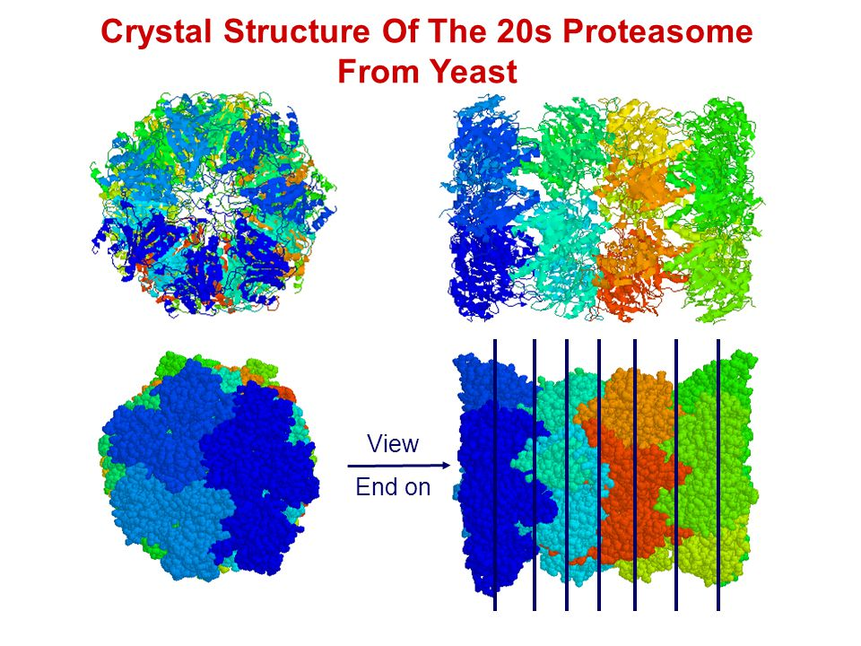 Crystal Structure Of The 20s Proteasome