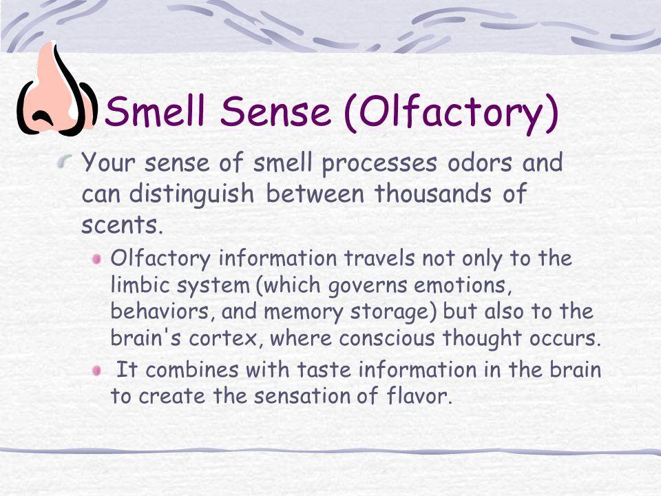 Smell Sense (Olfactory)