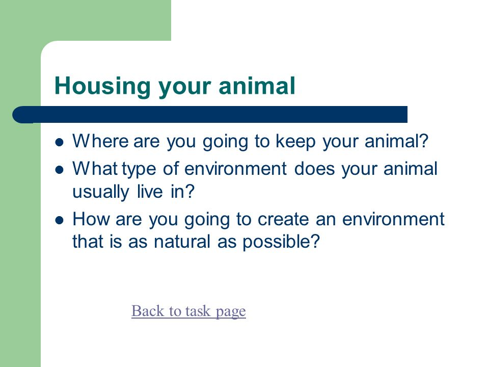 Housing your animal Where are you going to keep your animal