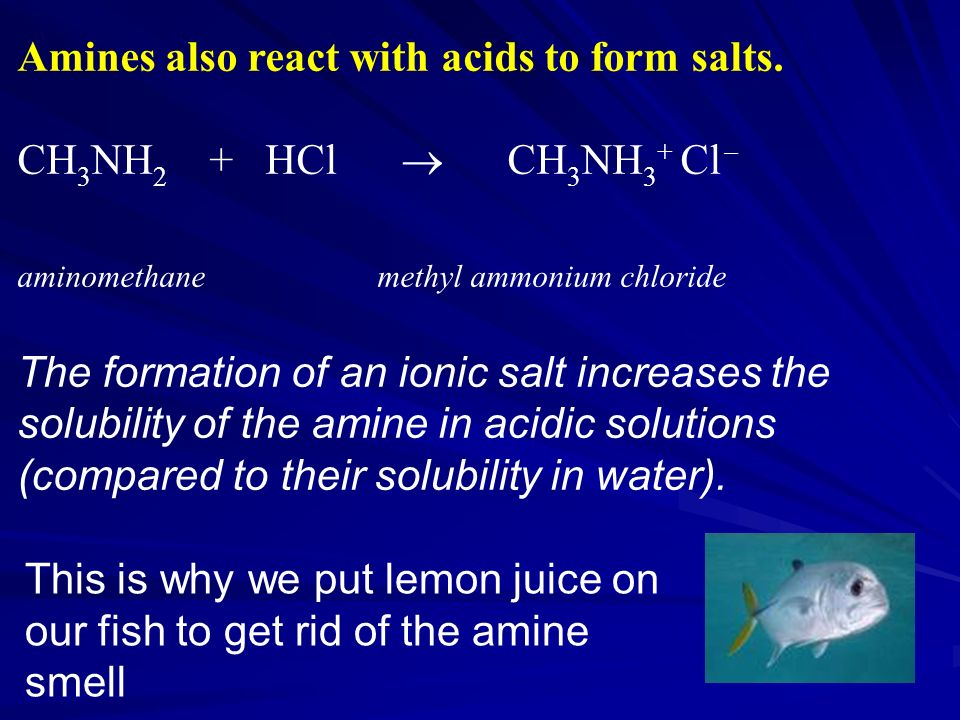 Amines also react with acids to form salts. CH3NH2 + HCl  CH3NH3+ Cl