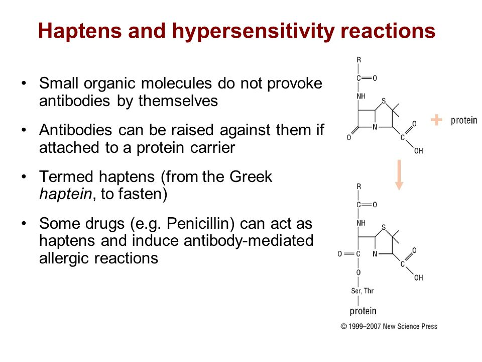 Haptens and hypersensitivity reactions