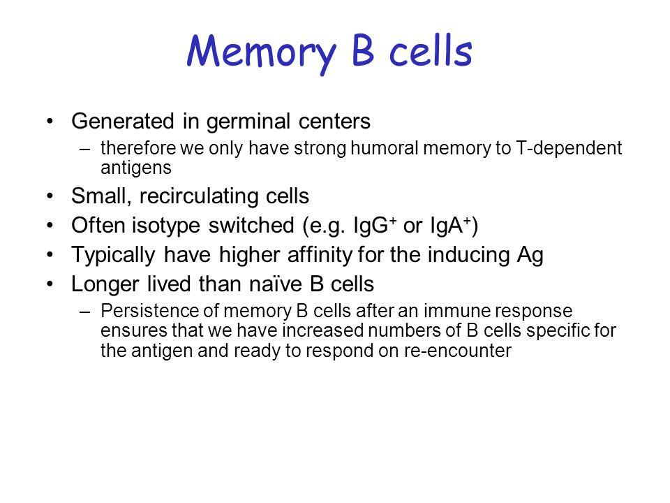 Memory B cells Generated in germinal centers
