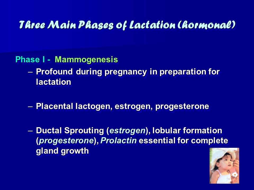 Three Main Phases of Lactation (hormonal)