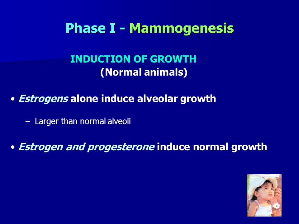 Phase I - Mammogenesis INDUCTION OF GROWTH (Normal animals)