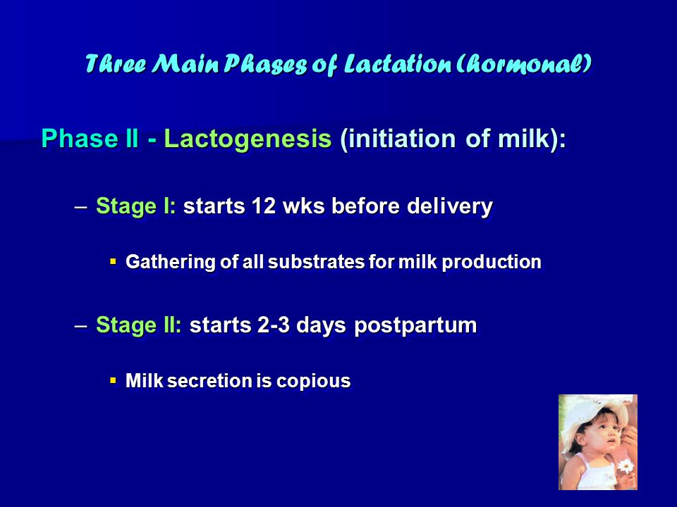 Three Main Phases of Lactation (hormonal)