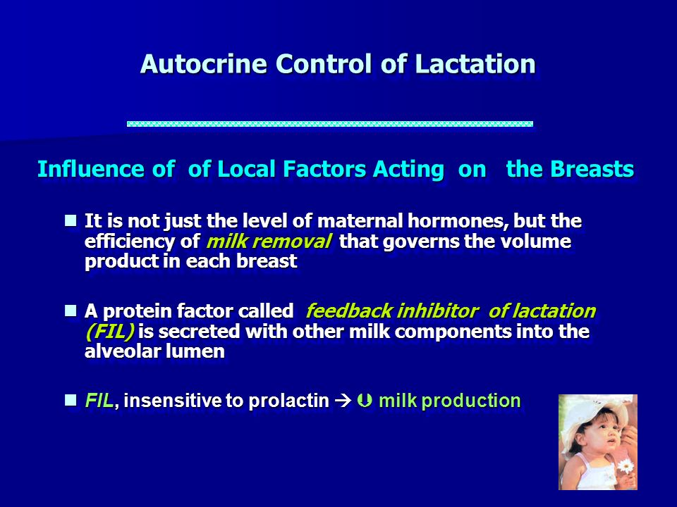 Autocrine Control of Lactation
