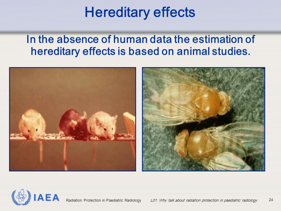 Hereditary effects In the absence of human data the estimation of hereditary effects is based on animal studies.