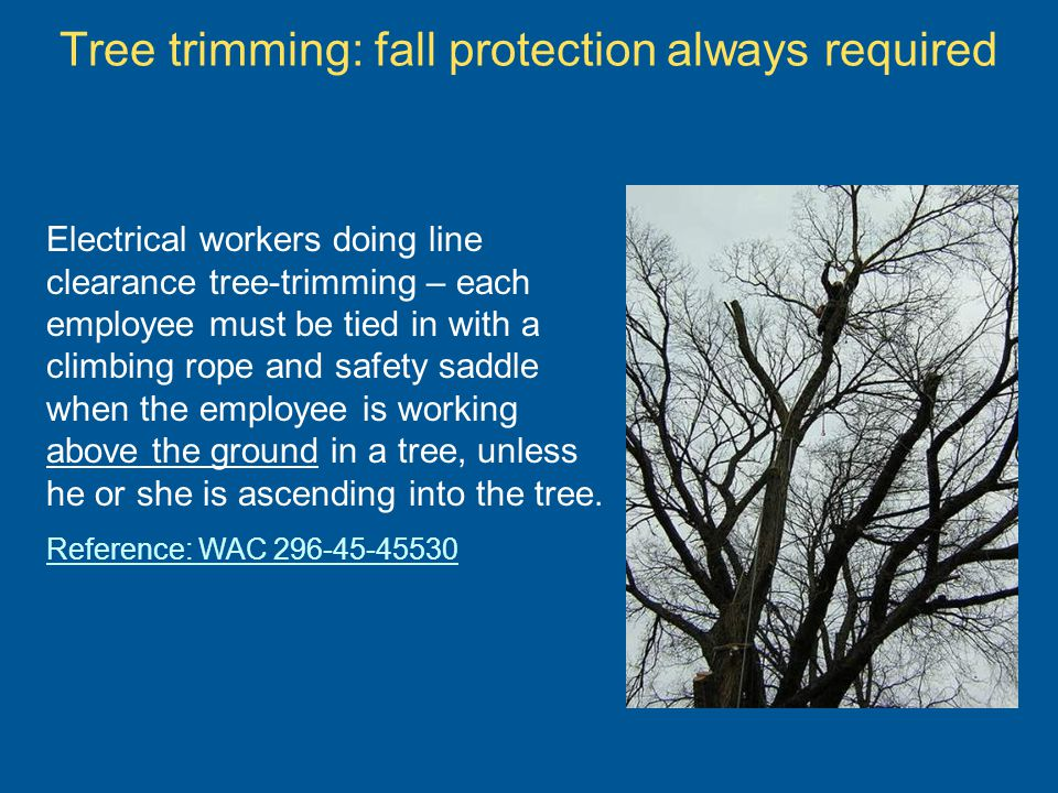 Tree trimming: fall protection always required