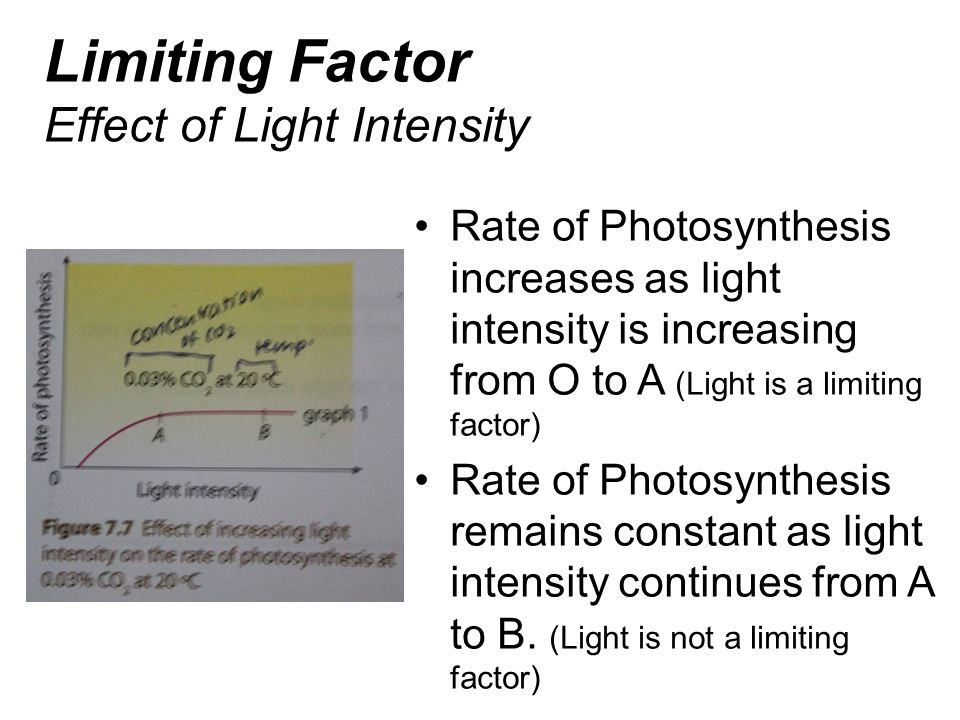 Limiting Factor Effect of Light Intensity
