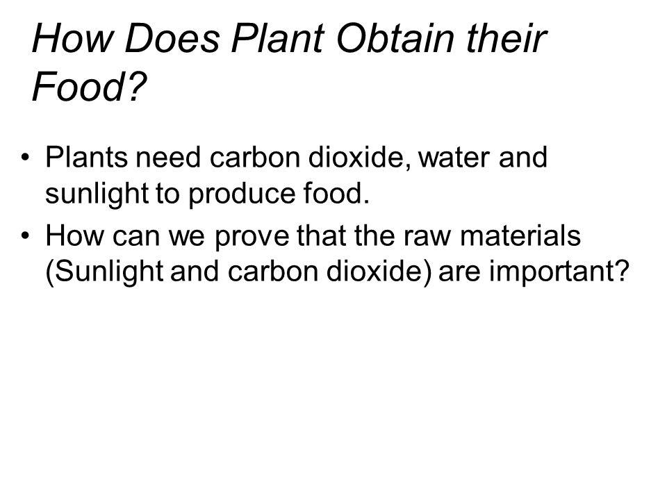 How Does Plant Obtain their Food