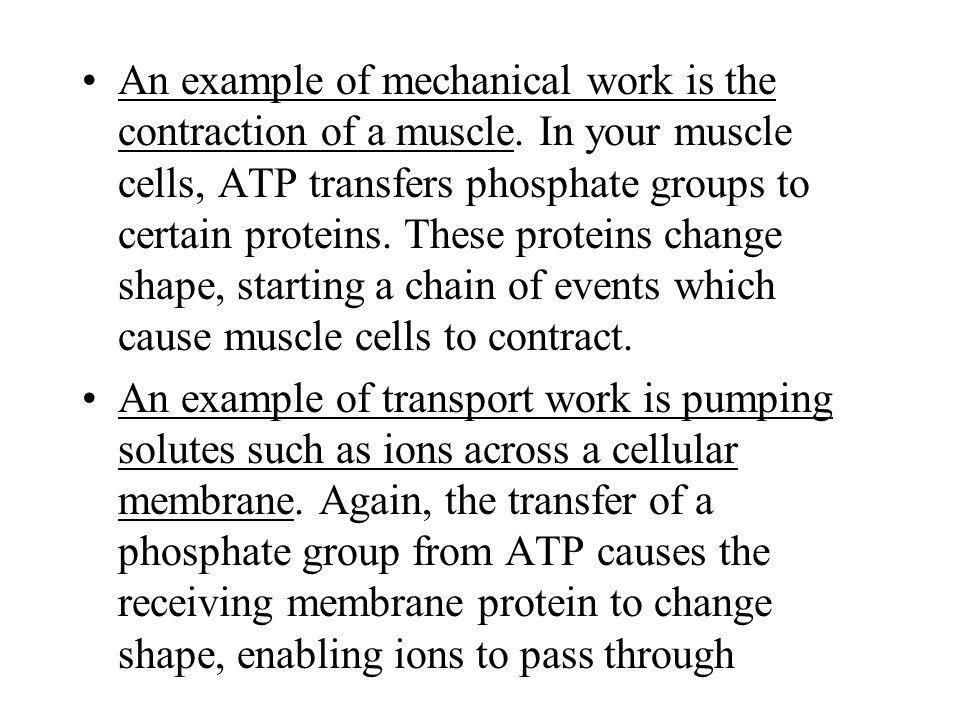 An example of mechanical work is the contraction of a muscle
