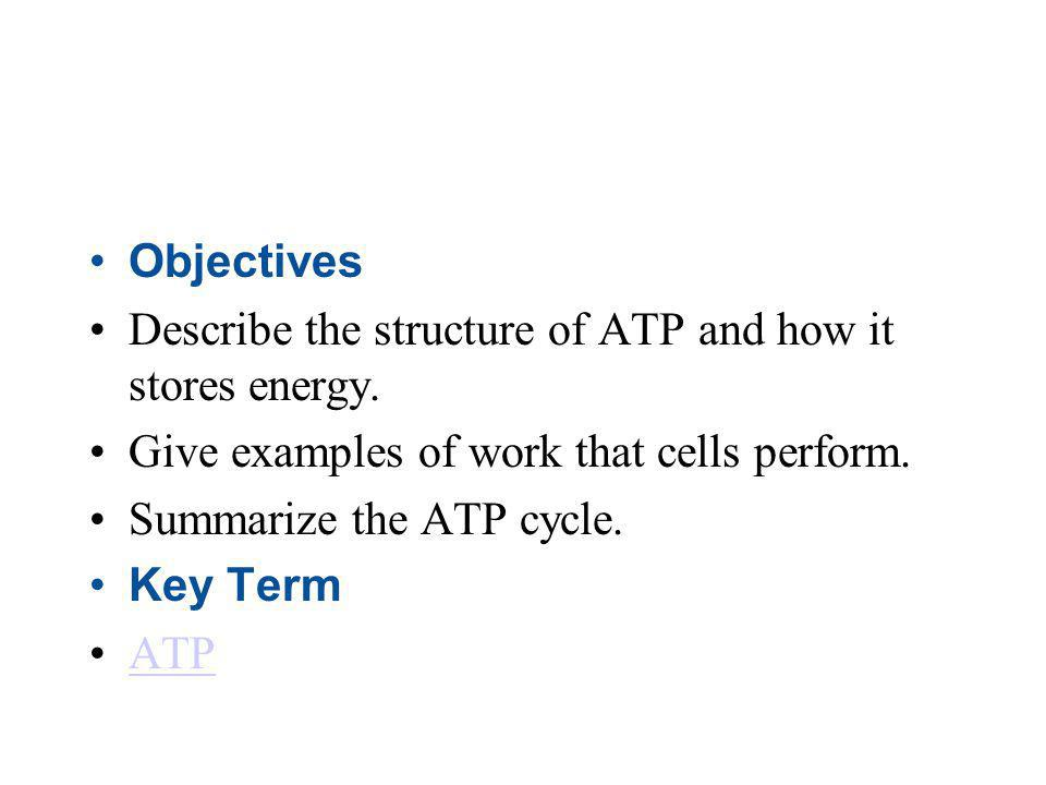 Objectives Describe the structure of ATP and how it stores energy. Give examples of work that cells perform.