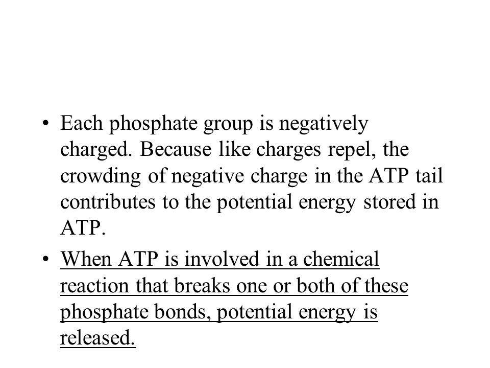 Each phosphate group is negatively charged