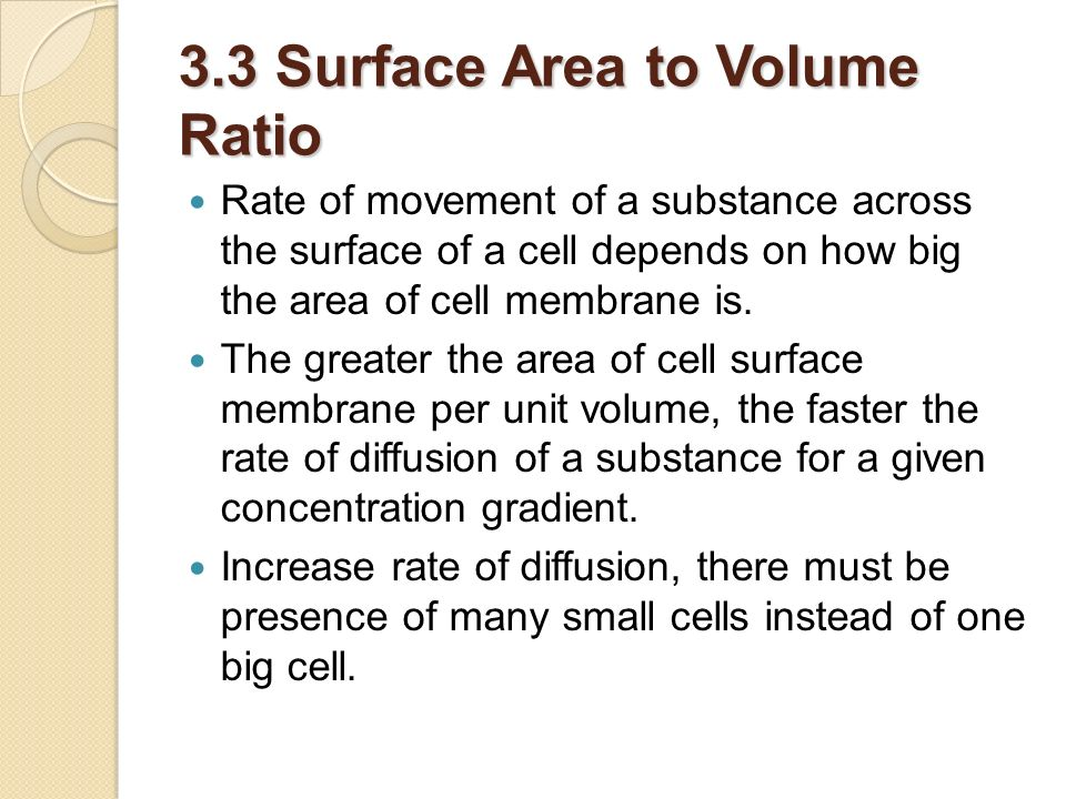 3.3 Surface Area to Volume Ratio
