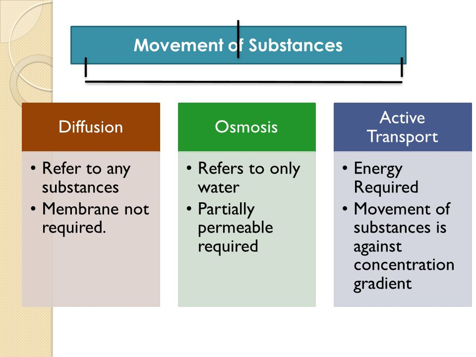 Movement of Substances