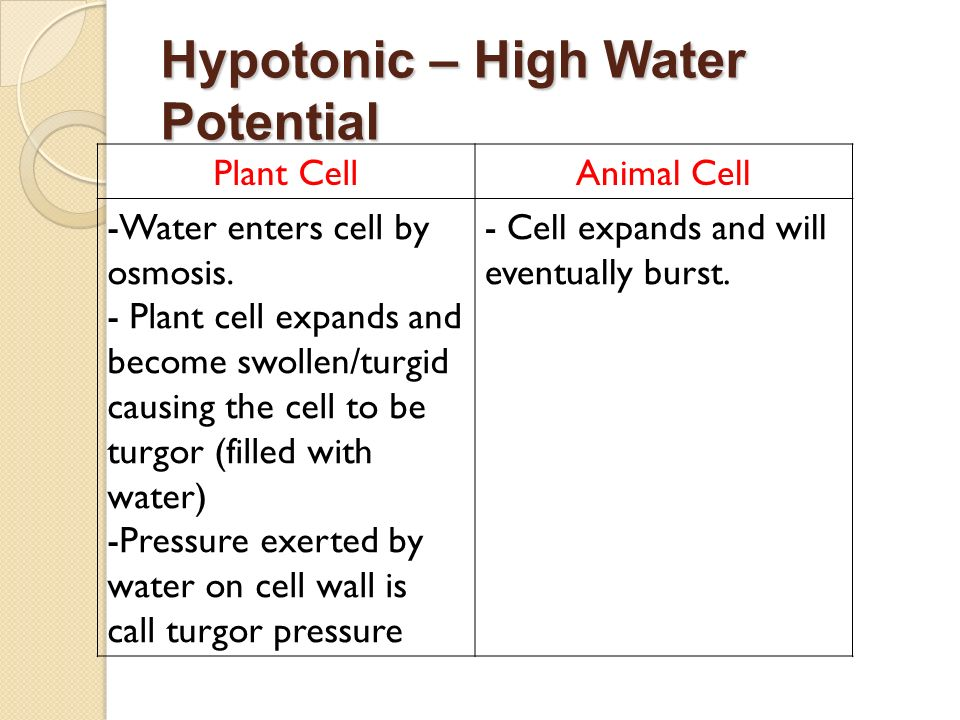 Hypotonic – High Water Potential