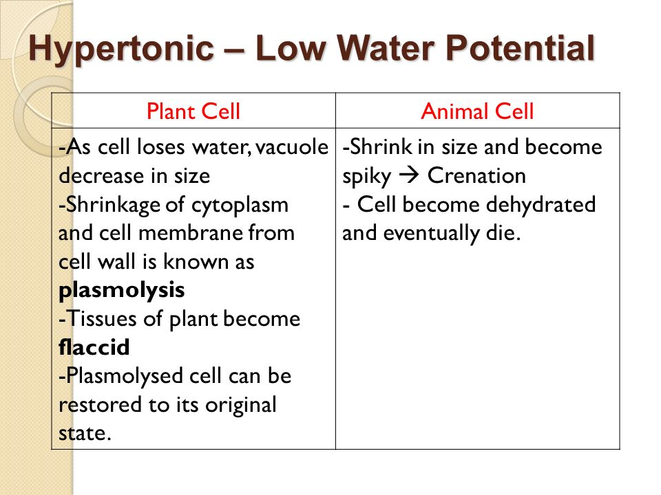 Hypertonic – Low Water Potential