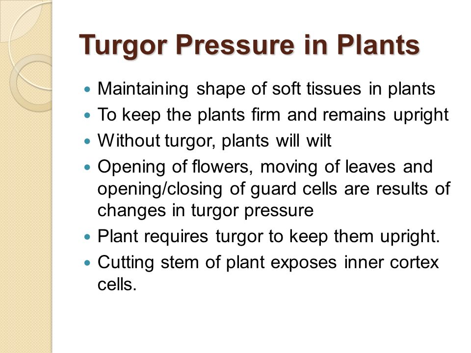 Turgor Pressure in Plants