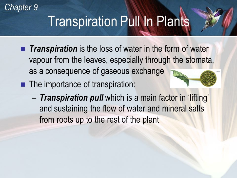 Transpiration Pull In Plants